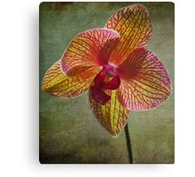 kaleidoscope orchid Canvas Print