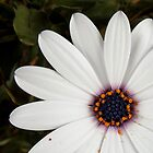 White flower by fita