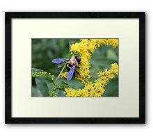 BumbleBee 01 Framed Print