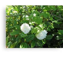 White Flowers from the Pacific Northwest Canvas Print