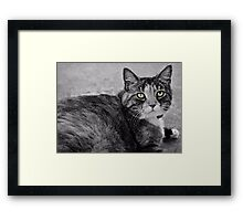 Precious Little One Framed Print