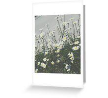 Daisy Film Greeting Card