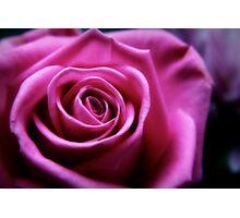 Soft Pink Rose Macro Photographic Print
