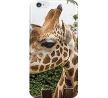 Giraffe at taronga Zoo iPhone Case/Skin