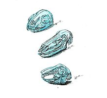 Study of Skulls Photographic Print