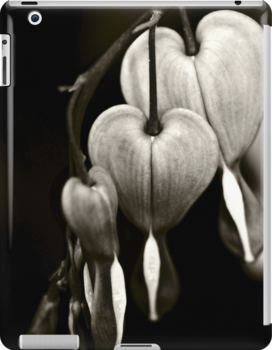Bleeding Hearts (Dicentra) flowers in black and white by Vicki Field