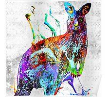Kangaroo Grunge Poster