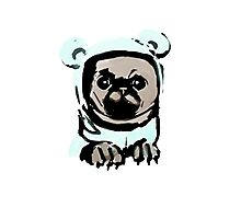 Pug in the hood Photographic Print