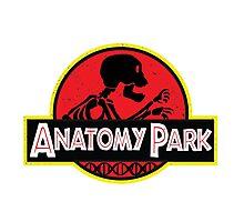 anatomy park Photographic Print