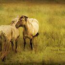 Photo art, Highland ponies by Hugh McKean