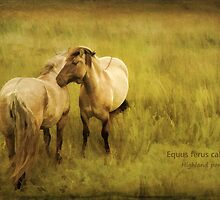 Photo art, Highland ponies by Hugh McKean