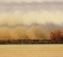 Trees and stripes by JBlaminsky