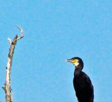 Cormorant on a branch resting Sticker