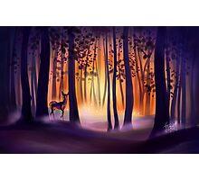 Deep Woods Sunrise Photographic Print