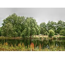 Weeping Willows Across the Lake Photographic Print