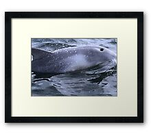 Surfacing, Gulf St Vincent Framed Print