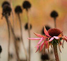 Echinacea and seedheads by Liz Outhwaite
