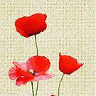 Poppy Days by Christine Lake