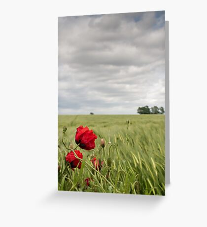 Poppies in a Norfolk field Greeting Card