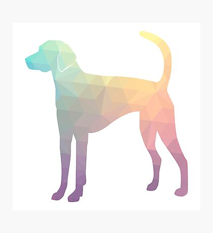 American Foxhound - Colorful Geometric Pattern Silhouette - Pastel Photographic Print