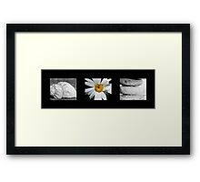 Give and Thanks Framed Print