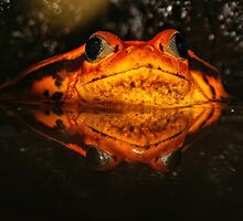 Croak by Epicurian