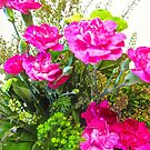 Carnations by Shulie1