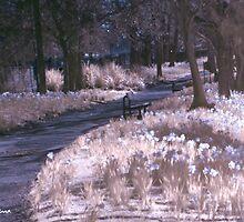 Infrared Park by kerriestuff