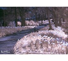 Infrared Park Photographic Print