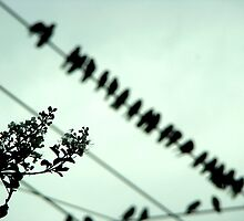 Upon a Wire by AGODIPhoto