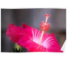 Red Hibiscus Macro Flower Poster