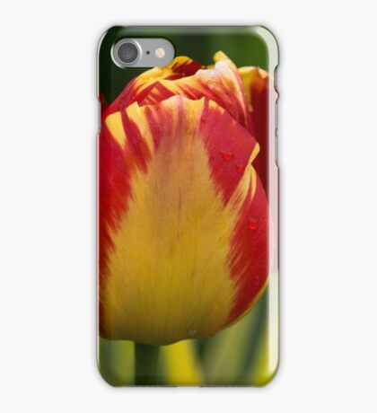 Sparkles and Warmth - a Red and Yellow Tulip in the Spring Rain iPhone Case/Skin