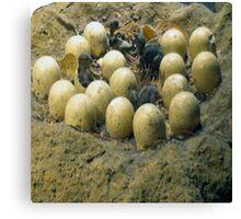 dino's eggs Canvas Print