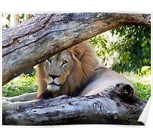 The Regal Lion Poster