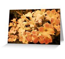 Yellow Kalanchoe Blossom Greeting Card