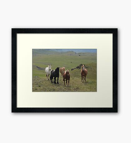 Where are the Apples! Framed Print