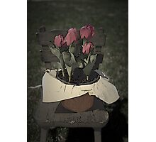 Tulips Setting on a Child's Wooden Chair Photographic Print