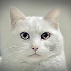 My Hello Kitty with No Bow by ibjennyjenny
