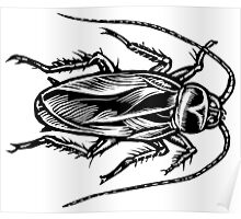 Cockroach (Top View) Poster