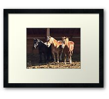 New Rescues Framed Print