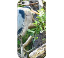 Beautiful Great Blue Heron iPhone Case/Skin
