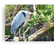 Beautiful Great Blue Heron Canvas Print