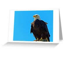 Bald Eagle Looking for dinner Greeting Card
