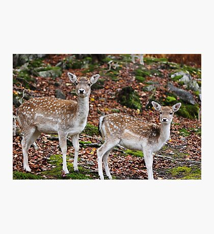 Fawns - Siblings Photographic Print