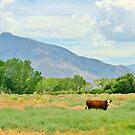 Pastorial by marilyn diaz