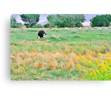 Going To Smell The Flowers Canvas Print