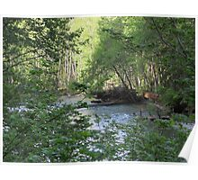 Beautiful nature scene in Olympic National Forest Poster