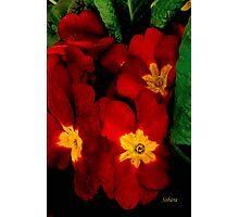 Bright Red Crescendo Photographic Print