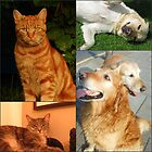 Canine and Feline Collage by kathrynsgallery