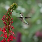 Ruby Throated Hummingbird 2016-4 by Thomas Young